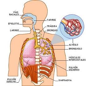 Los dolores en la espalda y temperatura 37 5
