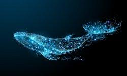 Definición de Fenómeno de la Ballena Azul
