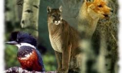 Definición de Zoología
